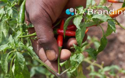 Agroexportaciones mexicanas registraron superávit